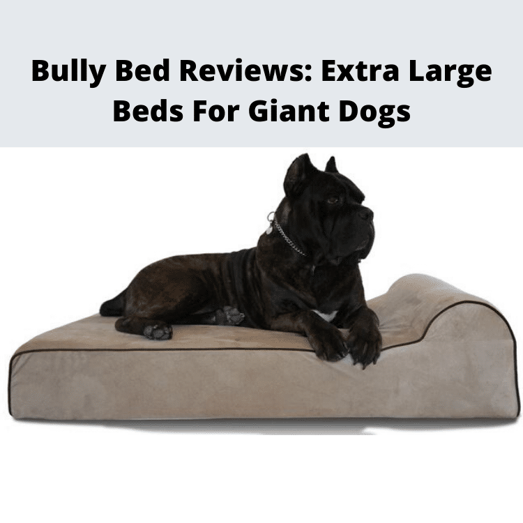 Bully Beds Giant Dog Bed